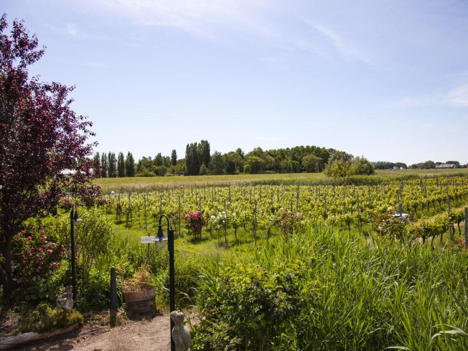 Extra rondleidingen door de wijnboer