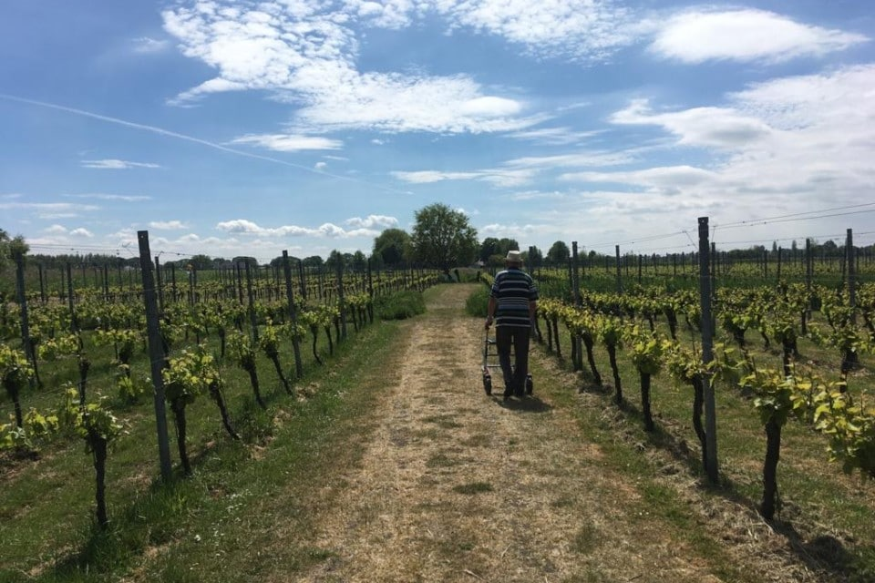 Man met rollator tussen de wijnranken