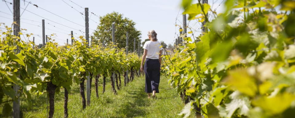 Wandelende vrouw tussen wijnranken