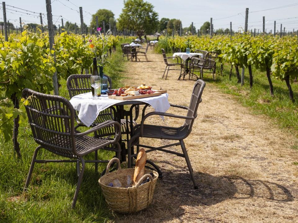 gedekte tafeltjes met stoelen in de wijngaard