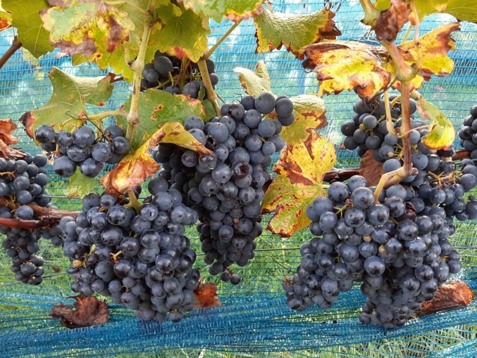 Oktober: oogstmaand